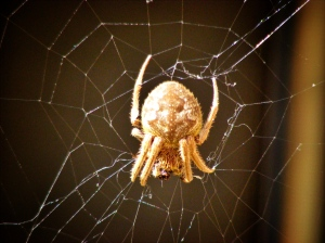 Spider and Trap - Photo by Ross Cochrane